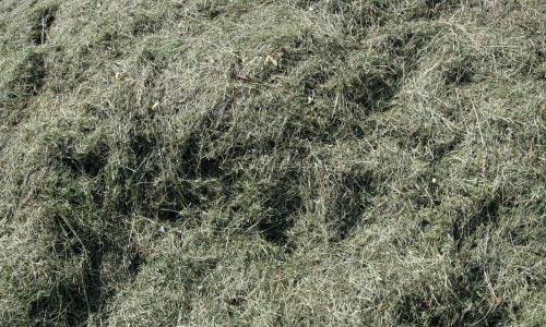 Comfy Hay Texture