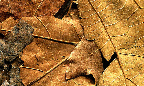 Extraordinary Dried Leaf Texture