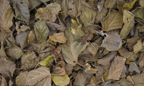 Very Useful Dried Leaf Texture