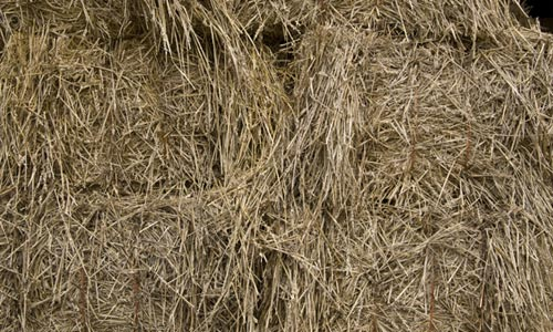 Really Comfortable Hay Texture