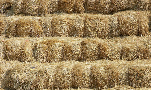 So Free Hay Texture