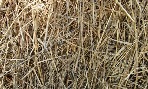 Nice Hay Texture