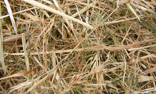 Cool Hay Texture