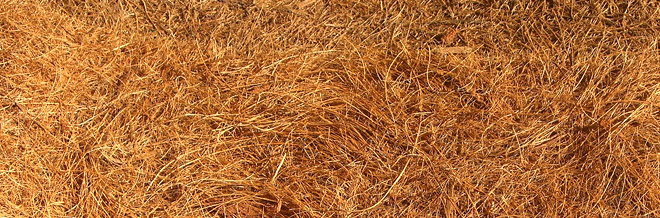 35 Free Straw and Hay Textures