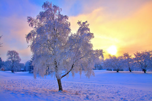 Unbelievably Enchanting Winter Photo