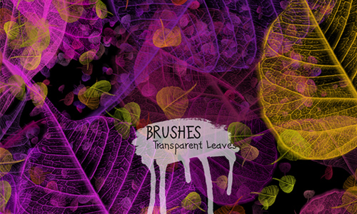 Transparent Leaves Brushes for PS