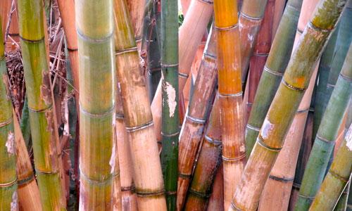 Bamboo Texture 1