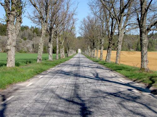 Springtime Road