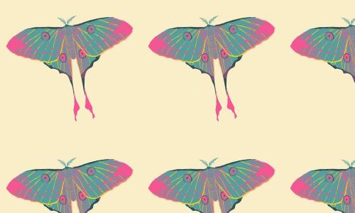 Pastel Moth