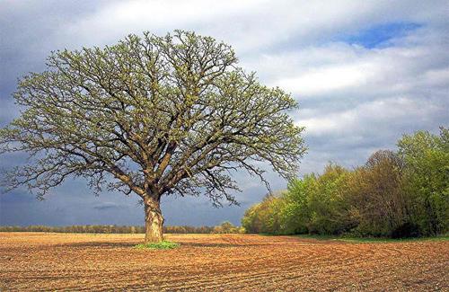 The Tree 20