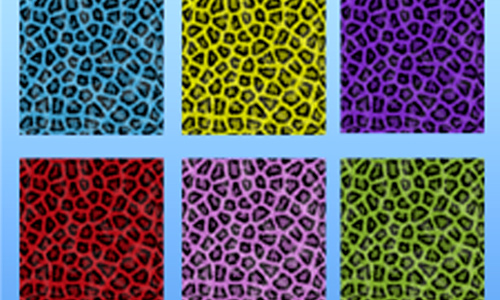 Animals Leopard Patterns