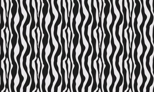 Look a Zebra!