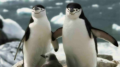 Penguin_Family