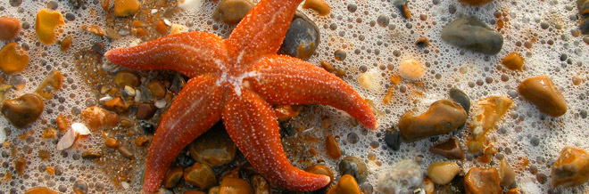 35 Beautifully Captured Starfish Pictures