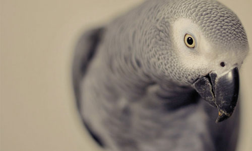 Innocent Looking Parrot Wallpaper