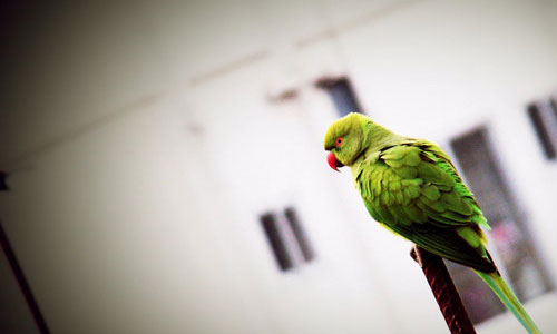 Nicely Taken Parrot Wallpaper