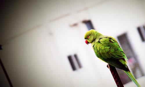 Nicely Taken Parrot Wallpaper