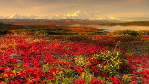 Alaska BeautiFul Garden Red Rose Wallpaper