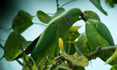 Attractive Collection Of Parrot Wallpapers