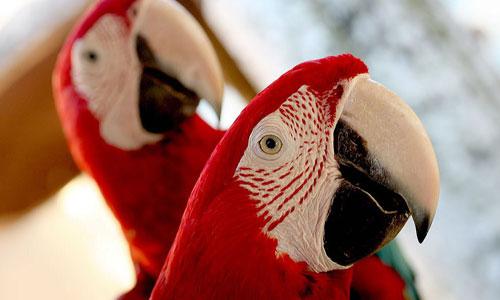 Lovely Parrot Wallpaper
