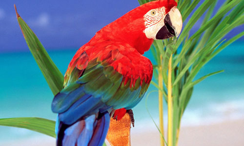 Really Amazing Parrot Wallpaper