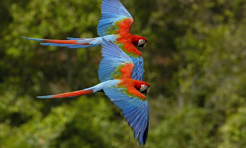Endearing Parrot Wallpaper
