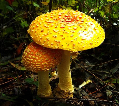 Mushroom Buddies