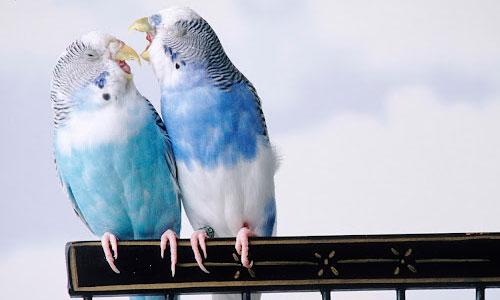 Pleasing Parrot Wallpaper