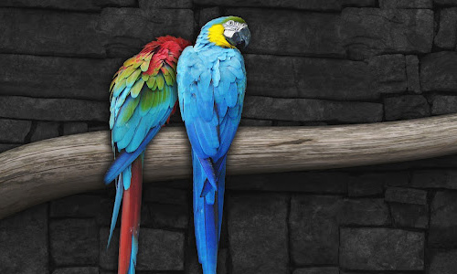 Really Lovely Parrot Wallpaper