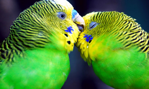 Heartwarming Parrot Wallpaper