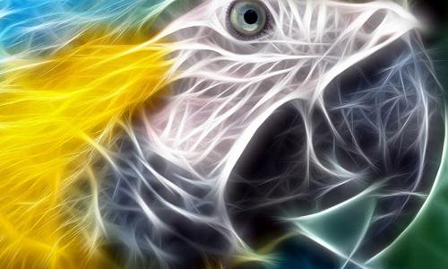 Artistic Parrot Wallpaper