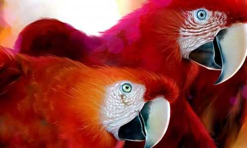 So Red Parrot Wallpaper
