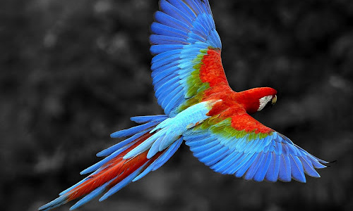 Innovative Parrot Wallpaper