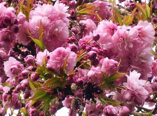 Inspired Blossom