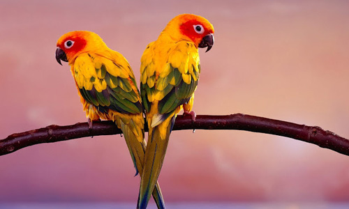 Desktop Perfect Parrot Wallpaper