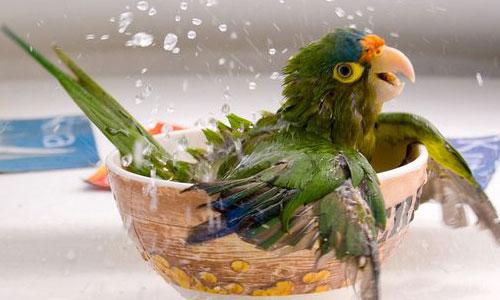 Attractive Parrot Wallpaper