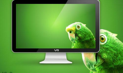 Extensive Parrot Wallpaper