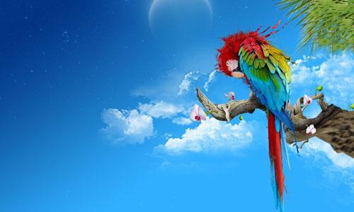 High Resolution Parrot Wallpaper
