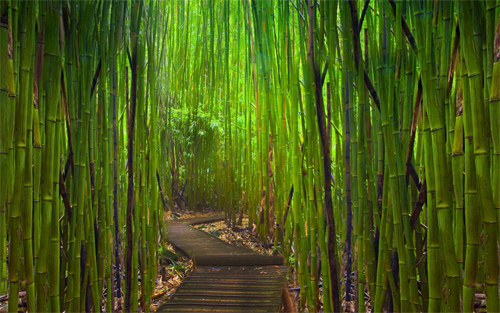 Road in bamboo forest wallpapers