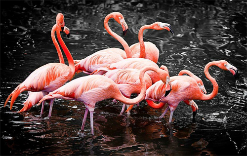 Flamingo Pack