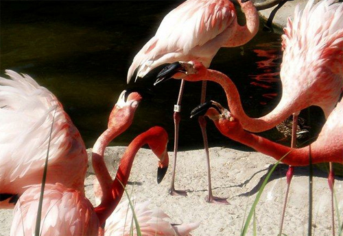 Flamingo Disagreement