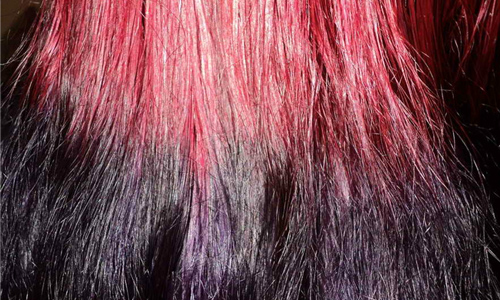 dans hair