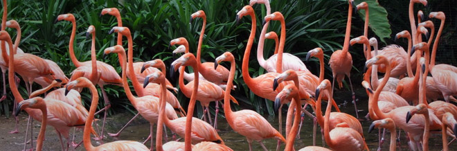30 Lovely Examples of Flamingo Picture