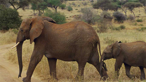 Mother and Son Elephant