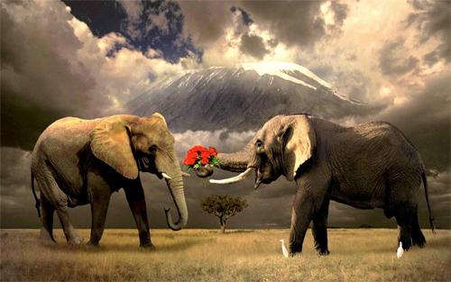 35 Beautiful Examples Of Elephant Wallpaper