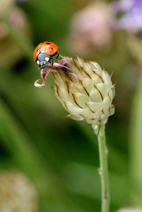 Lady bug photography