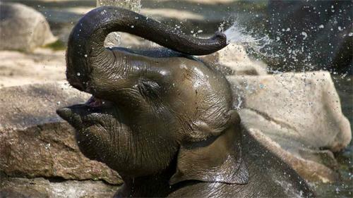 Elephant Baby Enjoying Life