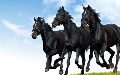 Black Beauty Trio Wallpaper