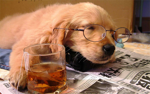 Tired dog Wallpaper