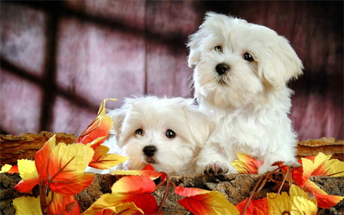 Two Lovely Puppies Wallpaper